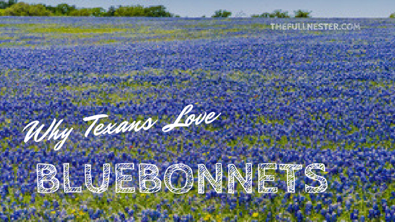 Why Texans Love Bluebonnets